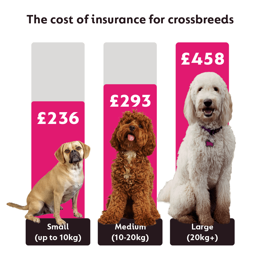 Average cost of insurance for different sized crossbreed dogs